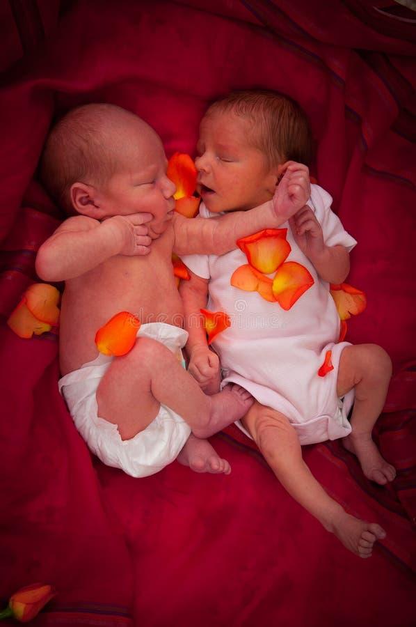 新出生的孪生 免版税库存图片