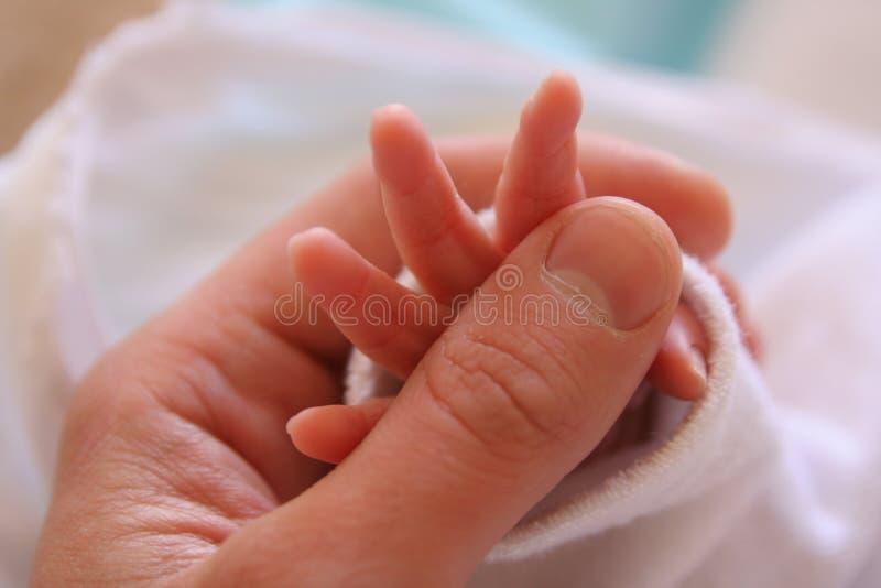 新出生的现有量 免版税图库摄影