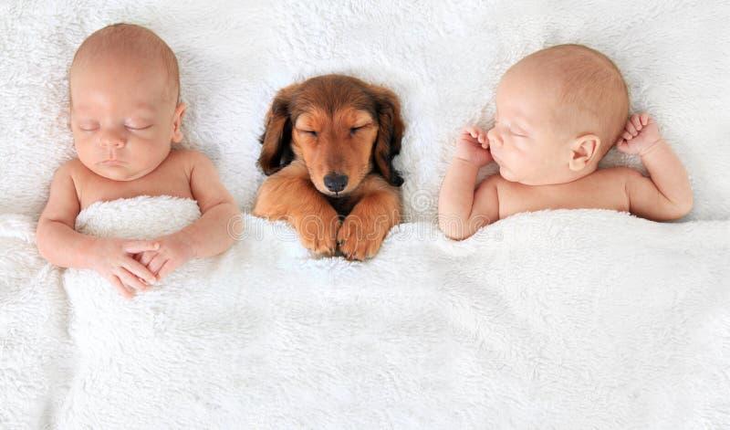 新出生的婴孩和小狗 免版税图库摄影
