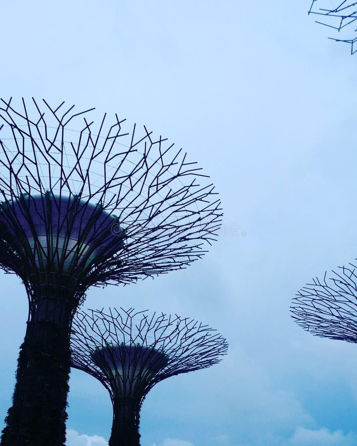 新加坡生活 库存图片