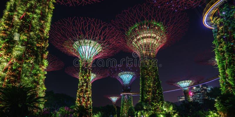 新加坡- 2018年10月16日:庭院supertrees全景由海湾的在晚上 库存图片