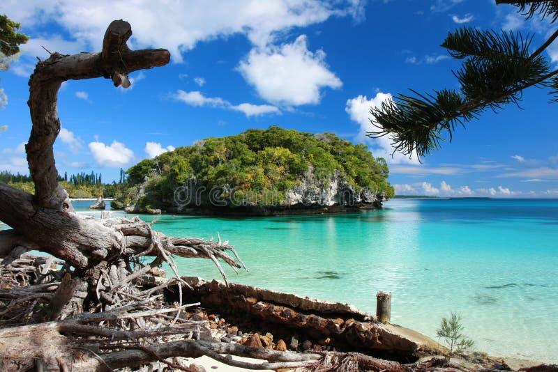 新卡里多尼亚,杉木小岛  免版税库存照片