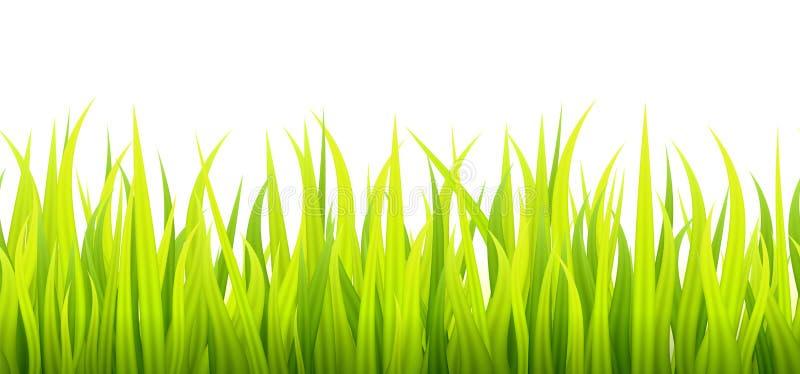 新和绿色春天草成长 向量例证