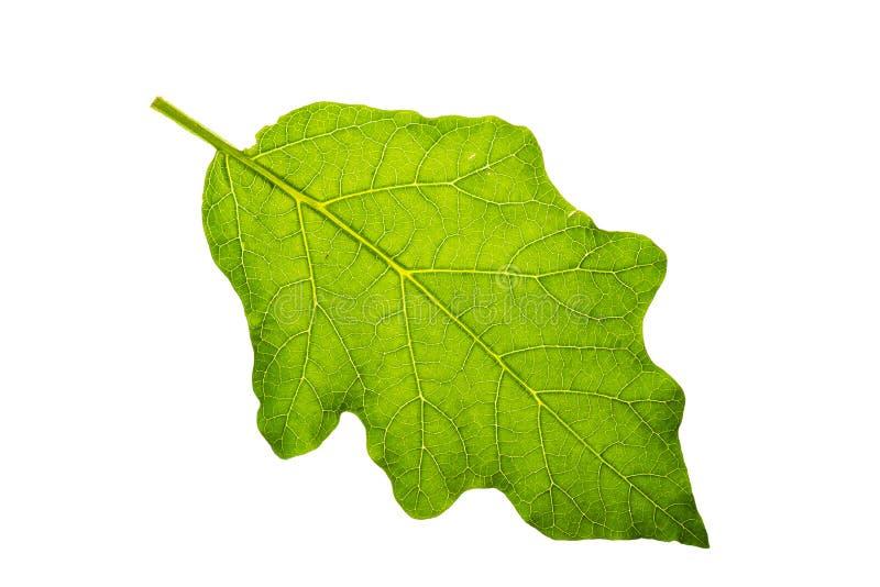 新和绿色热带和庭院树叶子纹理 库存照片