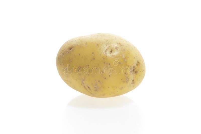 新土豆白色 库存图片