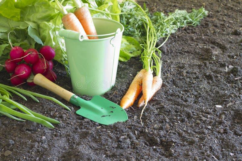 新在土壤的春天有机菜在庭院里 库存图片