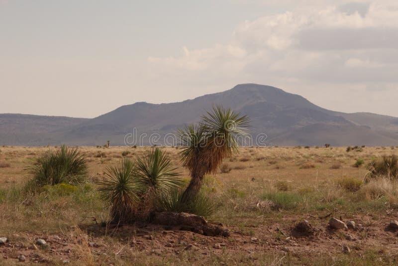 新墨西哥沙漠 免版税库存照片