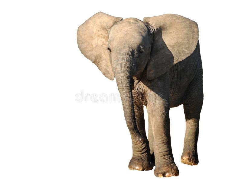 新大象 库存图片