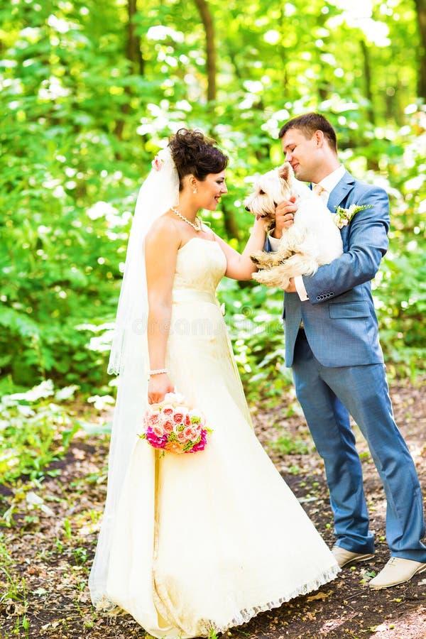 新娘和新郎与狗西部高地白色 免版税库存图片