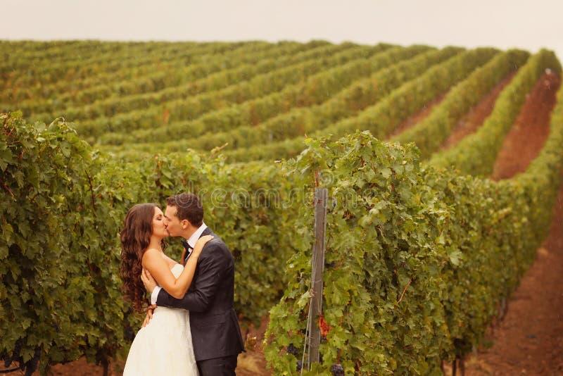 新娘和新郎在一个绿色冷的雨天葡萄园 免版税库存图片