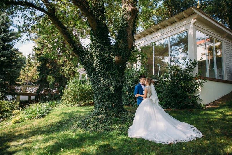 新娘和新郎拥抱并且互相亲吻站立在几百年的巨大的橡树下的,长满 库存照片