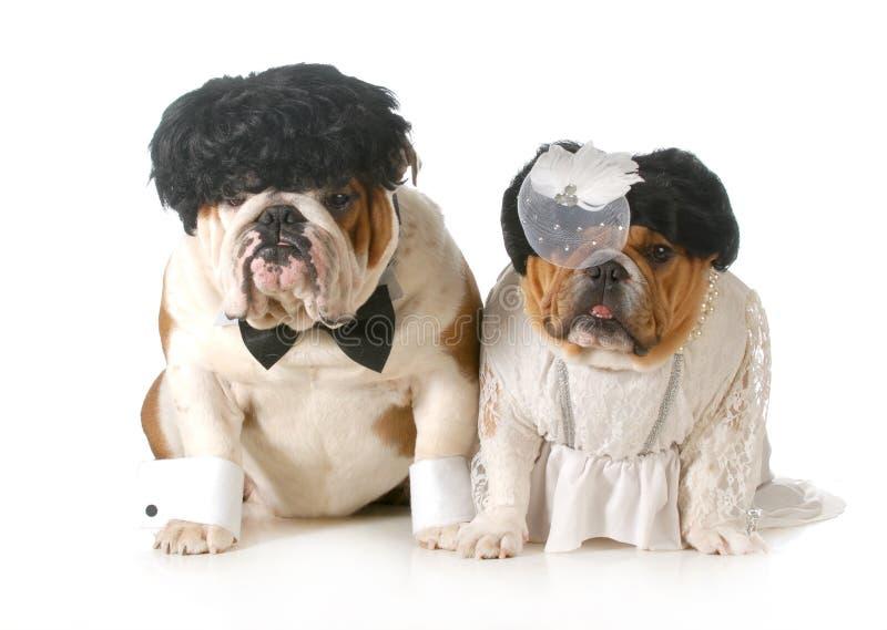 新娘和新郎狗 免版税库存图片