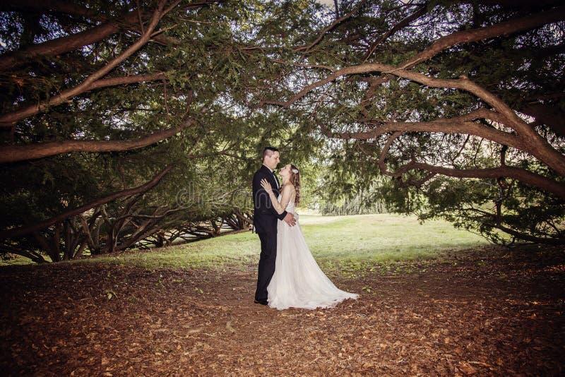 新娘和新郎画象在树机盖下  免版税库存图片