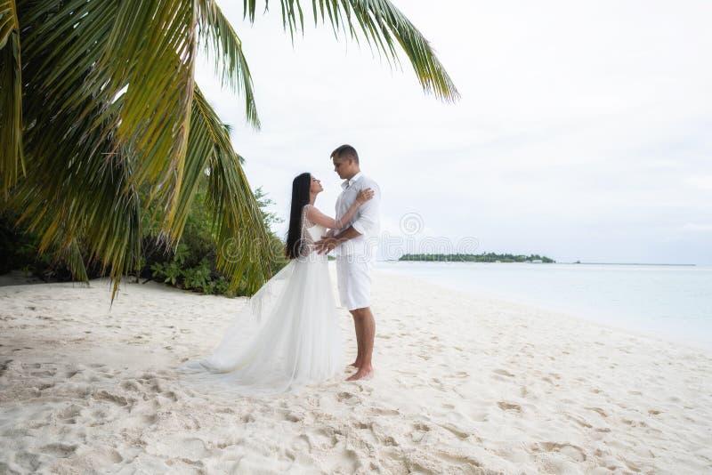 新婚佳偶亲吻在一个华美的海滩的一棵棕榈树下用白色沙子和绿松石水 库存照片