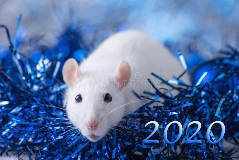 新年快乐!新年的标志2020年-白色或金属银鼠 与圣诞节的逗人喜爱的鼠装饰的 免版税库存图片