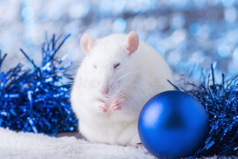 新年快乐!新年的标志2020年-白色或金属银鼠 与圣诞节的逗人喜爱的鼠装饰的 免版税库存照片