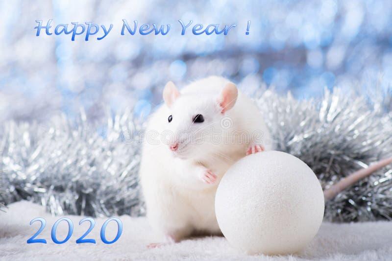 新年快乐!新年的标志2020年-白色或金属银鼠 与圣诞节的逗人喜爱的鼠装饰的 库存图片