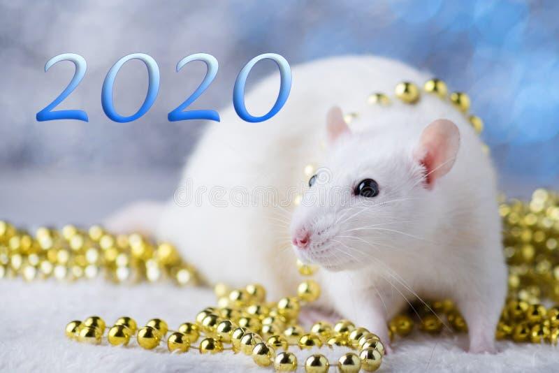 新年快乐!新年的标志2020年-白色或金属银鼠 与圣诞节的逗人喜爱的鼠装饰的 库存照片