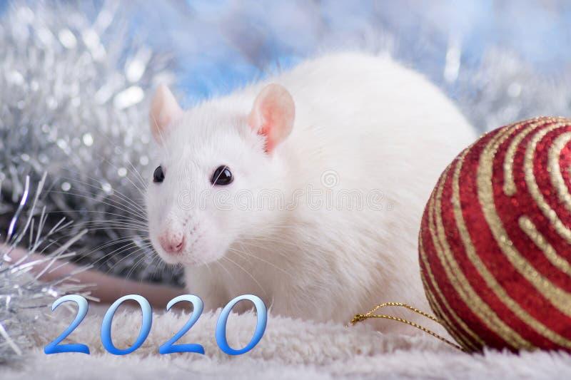 新年快乐!新年的标志2020年-白色或金属银鼠 与圣诞节的逗人喜爱的鼠装饰的 图库摄影