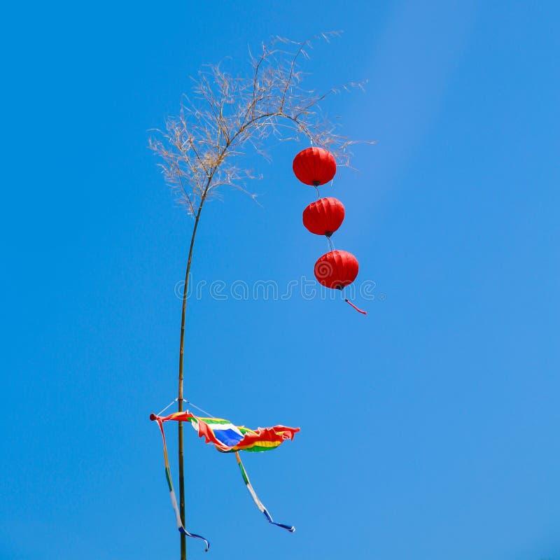 新年树在有红色灯笼的越南 库存照片
