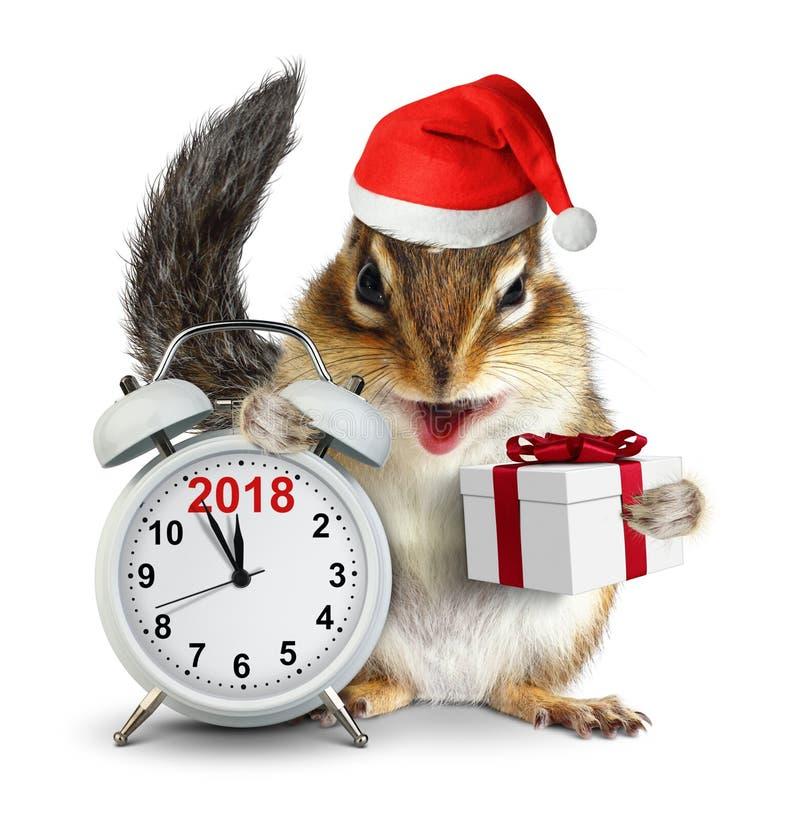 2018新年概念,在圣诞老人帽子的滑稽的花栗鼠有的clokc的 免版税图库摄影