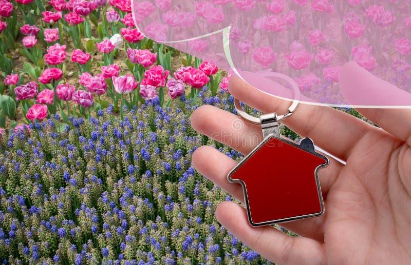 新开花的五颜六色的郁金香和房子象 免版税库存照片