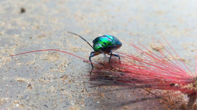 新彩虹的昆虫 库存照片