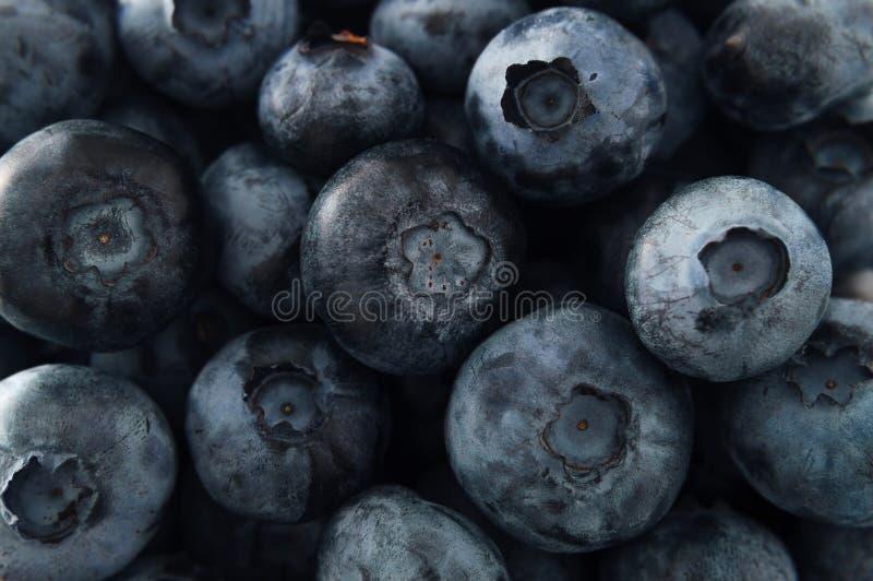 新成熟蓝莓背景 纹理蓝莓莓果, de 免版税库存照片