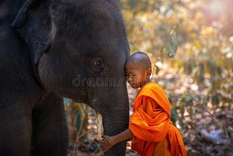 新手或修士拥抱大象 新手泰国身分和大大象有森林背景 南塔河胃区,素辇,泰国 免版税库存图片
