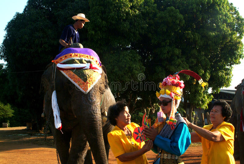 新手礼服Si Satchanalai大象后面整理的Proce 免版税库存图片