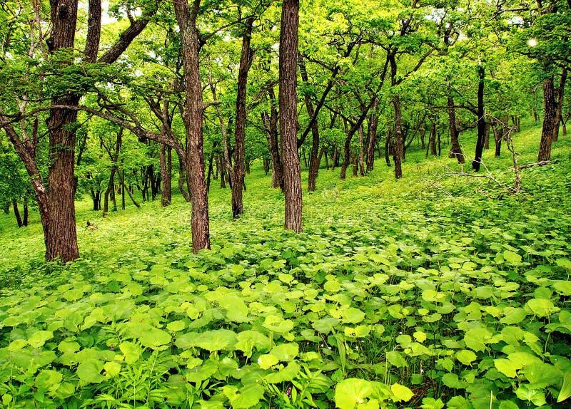 新春天森林 免版税库存照片