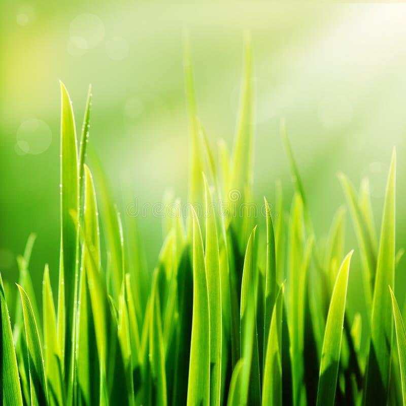 新春天绿草和星期日 库存图片