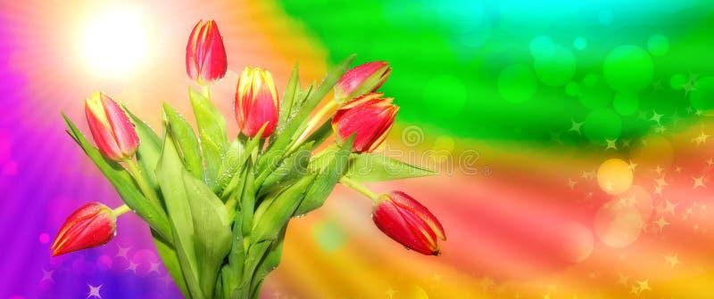 新春天 在春天太阳光芒多彩多姿的抽象背景的红色郁金香  库存图片