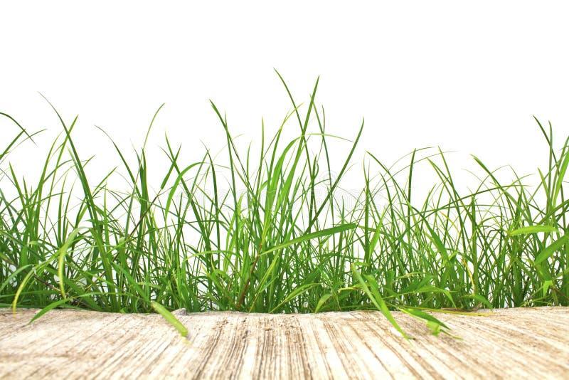 新春天绿草和被隔绝的水泥路 库存图片