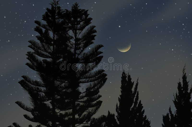 新月形月亮和明亮的星与杉树 免版税库存图片