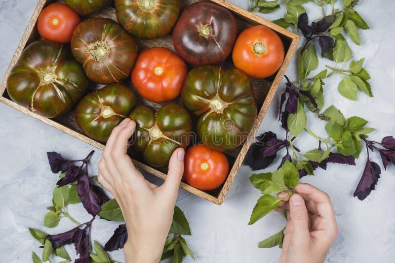 新有机农夫`在木箱、泰国蓬蒿叶子和妇女` s手的s Flatlay绿色和红色蕃茄 免版税库存图片