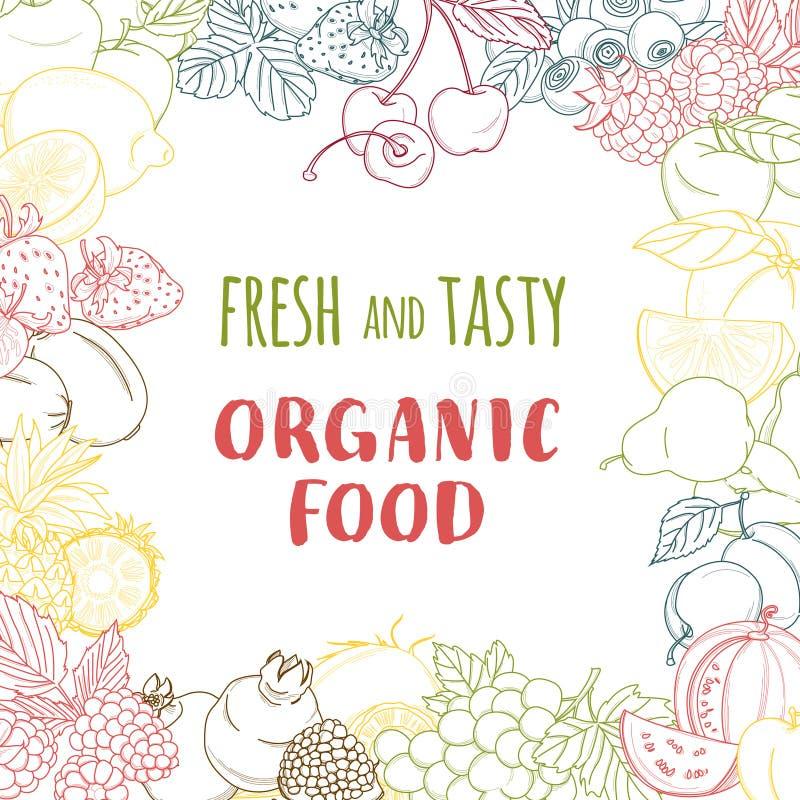 新有机春天夏天水果和蔬菜框架 等高 向量例证