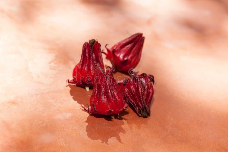 新木槿sabdariffa或roselle在桌上结果实 库存图片