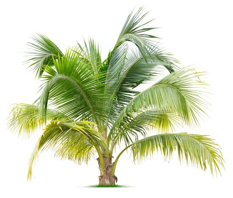 新棕榈树 免版税图库摄影