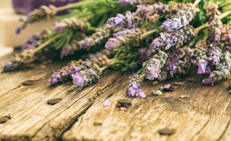 新淡紫色和拷贝空间 图库摄影