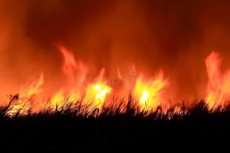 新火的森林 库存图片