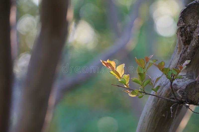 新的叶子的照片在一棵树的有模糊的背景 库存图片