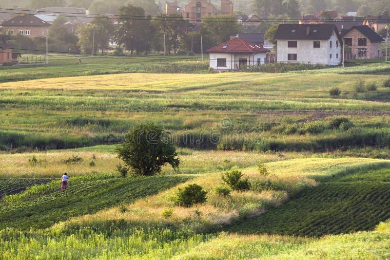 新的安静的住宅郊区宽夏天全景  lit. 免版税库存图片