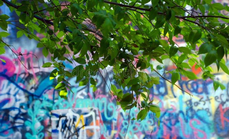 新的春天叶子在希望公园 库存图片