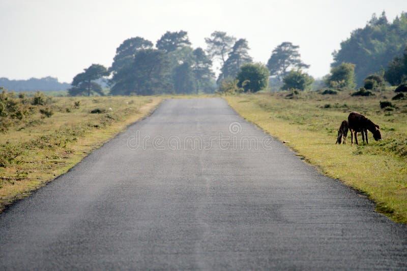 新的森林公路 免版税库存照片