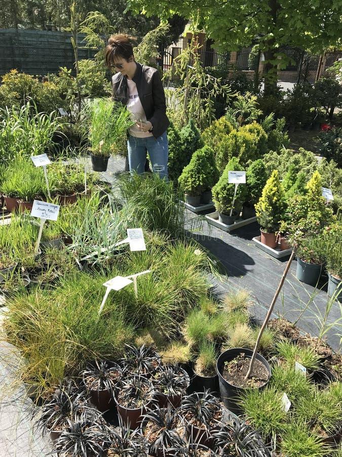 新的植物和花的妇女购物在从事园艺和植物室外供营商 库存图片