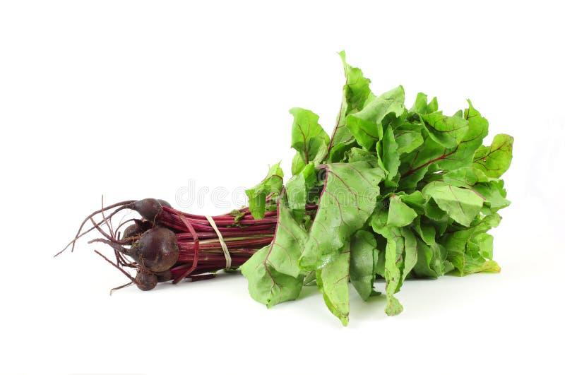 新的甜菜绿叶 库存照片