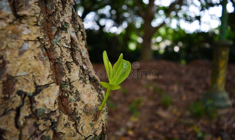 新的生活开始 新的起点 在土壤的植物萌芽 库存照片