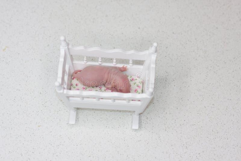 新的生活的概念 新出生的鼠崽在小儿床睡觉 免版税库存图片