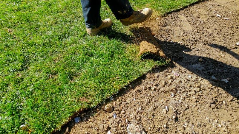 新的草皮草设施专业花匠 草劳斯在后院的 库存照片